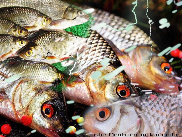 не всяк рыбак кто рыбку