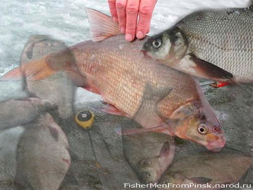 рыбалка в харькове на леща
